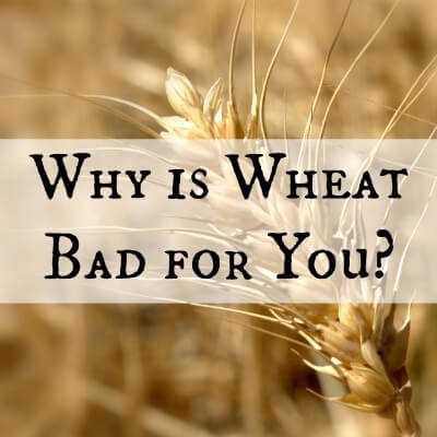 Why Is Wheat Bad For You What Scientific Studies Say